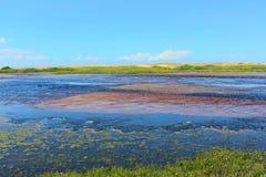 Όμορφο τοπίο Barra de Punaú, όπου τα νερά του ποταμού Punaú συναντούν τη θάλασσα/γενέθλιος, Βραζιλία Στοκ Φωτογραφία