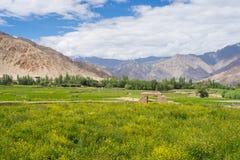 Όμορφο τοπίο Leh σε θερινή περίοδο, Ladakh, Ινδία Στοκ Φωτογραφίες