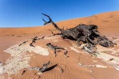 Όμορφο τοπίο Sossusvlei της κοιλάδας θανάτου, Ναμίμπια Στοκ Φωτογραφίες