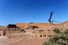 Όμορφο τοπίο Sossusvlei της κοιλάδας θανάτου, Ναμίμπια Στοκ φωτογραφία με δικαίωμα ελεύθερης χρήσης