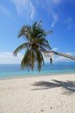 Όμορφο τροπικό δέντρο καρύδων άμμου παραλιών άσπρο με το μπλε ουρανό ο Στοκ φωτογραφία με δικαίωμα ελεύθερης χρήσης