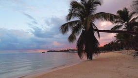 Όμορφο τροπικό νησί Καραϊβικής με την παραλία, τη θάλασσα, και το φοίνικα καρύδων στην ανατολή Υπόβαθρο θερινών διακοπών φιλμ μικρού μήκους