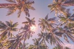 Όμορφο τροπικό σχέδιο με τους φοίνικες και μπλε ουρανός για το τροπικό υπόβαθρο παραλιών Στοκ φωτογραφία με δικαίωμα ελεύθερης χρήσης