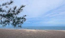 Όμορφο τροπικό υπόβαθρο θάλασσας και μπλε ουρανού με τα δέντρα πεύκων στην παραλία άμμου Στοκ εικόνες με δικαίωμα ελεύθερης χρήσης
