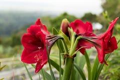 Όμορφο τροπικό υπόβαθρο λουλουδιών στο νησί του Μπαλί, Ινδονησία Κλείστε επάνω των λουλουδιών Στοκ φωτογραφία με δικαίωμα ελεύθερης χρήσης