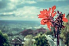 Όμορφο τροπικό υπόβαθρο λουλουδιών στο νησί του Μπαλί, Ινδονησία Κλείστε επάνω των λουλουδιών Στοκ Εικόνες