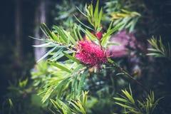 Όμορφο τροπικό υπόβαθρο λουλουδιών στο νησί του Μπαλί, Ινδονησία Κλείστε επάνω των λουλουδιών Στοκ φωτογραφίες με δικαίωμα ελεύθερης χρήσης