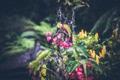 Όμορφο τροπικό υπόβαθρο λουλουδιών στο νησί του Μπαλί, Ινδονησία Κλείστε επάνω των λουλουδιών Στοκ εικόνα με δικαίωμα ελεύθερης χρήσης