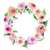 Όμορφο τρυφερό πανέμορφο φωτεινό καλό floral βατράχιο τριαντάφυλλων άνοιξη με το πράσινο watercolor στεφανιών φύλλων απεικόνιση αποθεμάτων