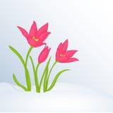 Όμορφο υπόβαθρο άνοιξη με Tulipa στο χιόνι για τα συγχαρητήρια με την άνοιξη ή την ημέρα των γυναικών Αφίσα ή αφίσσα διακοπών Στοκ εικόνα με δικαίωμα ελεύθερης χρήσης