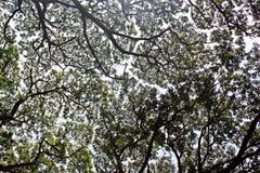 Όμορφο υπόβαθρο δέντρων στο πάρκο Στοκ φωτογραφίες με δικαίωμα ελεύθερης χρήσης
