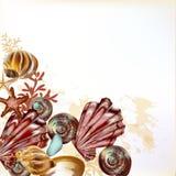 Όμορφο υπόβαθρο θάλασσας με τα κοχύλια απεικόνιση αποθεμάτων