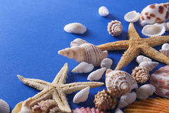 Όμορφο υπόβαθρο θαλασσινών κοχυλιών Στοκ φωτογραφία με δικαίωμα ελεύθερης χρήσης