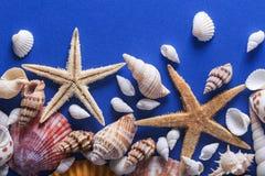 Όμορφο υπόβαθρο θαλασσινών κοχυλιών Στοκ εικόνες με δικαίωμα ελεύθερης χρήσης