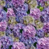 Όμορφο υπόβαθρο λουλουδιών hydrangea στοκ φωτογραφία με δικαίωμα ελεύθερης χρήσης