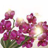 Όμορφο υπόβαθρο με τα λουλούδια ορχιδεών Στοκ φωτογραφία με δικαίωμα ελεύθερης χρήσης