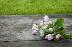 Όμορφο υπόβαθρο με τα λουλούδια της Apple Στοκ Εικόνα