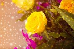 Όμορφο υπόβαθρο με τα τριαντάφυλλα λουλουδιών Στοκ Φωτογραφίες
