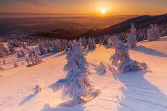 Όμορφο υπόβαθρο με τα χειμερινά δέντρα που καλύπτονται με το φρέσκο χιόνι στα βουνά με το ζωηρόχρωμο ουρανό στην ανατολή στοκ φωτογραφία με δικαίωμα ελεύθερης χρήσης