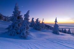 Όμορφο υπόβαθρο με τα χειμερινά δέντρα που καλύπτονται με το φρέσκο χιόνι στα βουνά με το ζωηρόχρωμο ουρανό στην ανατολή στοκ φωτογραφίες με δικαίωμα ελεύθερης χρήσης
