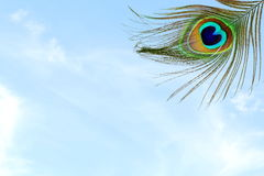 Όμορφο υπόβαθρο με το φτερό peacock στο υπόβαθρο ουρανού Στοκ εικόνες με δικαίωμα ελεύθερης χρήσης