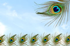 Όμορφο υπόβαθρο με το φτερό peacock στο υπόβαθρο ουρανού Στοκ Εικόνες