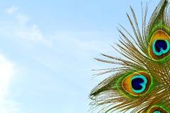 Όμορφο υπόβαθρο με το φτερό peacock στο υπόβαθρο ουρανού Στοκ Φωτογραφίες