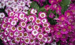 Όμορφο υπόβαθρο λουλουδιών για τη γαμήλια σκηνή στοκ εικόνα με δικαίωμα ελεύθερης χρήσης
