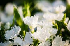 Όμορφο υπόβαθρο λουλουδιών, κινηματογράφηση σε πρώτο πλάνο του όμορφου muti-χρώματος φ Στοκ φωτογραφία με δικαίωμα ελεύθερης χρήσης