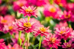 Όμορφο υπόβαθρο λουλουδιών, κινηματογράφηση σε πρώτο πλάνο του όμορφου muti-χρώματος φ Στοκ Εικόνες