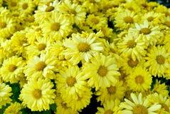Όμορφο υπόβαθρο λουλουδιών κινηματογραφήσεων σε πρώτο πλάνο Στοκ Φωτογραφίες