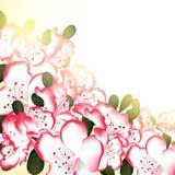 Όμορφο υπόβαθρο λουλουδιών με το άσπρο ροζ Στοκ φωτογραφίες με δικαίωμα ελεύθερης χρήσης