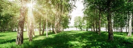 Όμορφο υπόβαθρο πάρκων στοκ φωτογραφίες με δικαίωμα ελεύθερης χρήσης