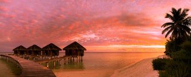 Όμορφο υπόβαθρο παραλιών ηλιοβασιλέματος, μπλε θάλασσα και πράσινοι φοίνικες Διακοπές θερινού ταξιδιού και έννοια υποβάθρου διακο Στοκ Εικόνα