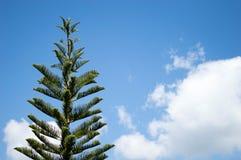 Όμορφο υπόβαθρο πεύκων με το μπλε ουρανό στοκ εικόνα με δικαίωμα ελεύθερης χρήσης