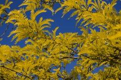 Όμορφο υπόβαθρο των κίτρινων φύλλων στο υπόβαθρο ουρανού Στοκ Φωτογραφία