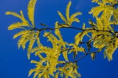 Όμορφο υπόβαθρο των κίτρινων φύλλων στο υπόβαθρο ουρανού Στοκ φωτογραφία με δικαίωμα ελεύθερης χρήσης