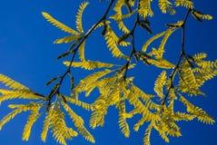 Όμορφο υπόβαθρο των κίτρινων φύλλων στο υπόβαθρο ουρανού Στοκ φωτογραφίες με δικαίωμα ελεύθερης χρήσης