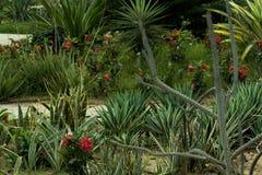 Όμορφο υπόβαθρο των πράσινων φύλλων στοκ εικόνες