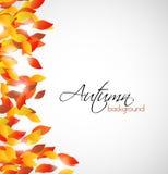 Όμορφο υπόβαθρο φθινοπώρου με τη θέση για το κείμενο Διανυσματική απεικόνιση