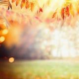 Όμορφο υπόβαθρο φθινοπώρου με το ζωηρόχρωμο φύλλωμα πτώσης στο υπόβαθρο ηλιαχτίδων Υπαίθρια φύση πτώσης στοκ εικόνα