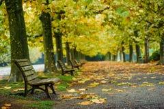 Όμορφο υπόβαθρο φθινοπώρου, πολύχρωμο του δέντρου σφενδάμνου στο shinjuk Στοκ εικόνα με δικαίωμα ελεύθερης χρήσης