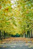 Όμορφο υπόβαθρο φθινοπώρου, πολύχρωμο του δέντρου σφενδάμνου στο shinjuk Στοκ Εικόνα