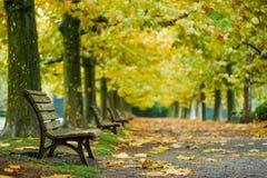 Όμορφο υπόβαθρο φθινοπώρου, πολύχρωμο των δέντρων σφενδάμνου στο shinjuk Στοκ Εικόνες