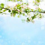 Όμορφο υπόβαθρο φύσης άνοιξη Στοκ εικόνες με δικαίωμα ελεύθερης χρήσης