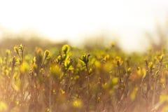 Όμορφο υπόβαθρο φύσης Καλοκαίρι, έννοιες άνοιξης στοκ φωτογραφίες