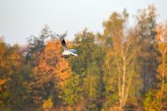 Όμορφο υπόβαθρο φύσης με το πουλί κατά την πτήση Στοκ Φωτογραφίες