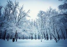 Όμορφο υπόβαθρο χειμερινών τοπίων με τα χιονισμένους δέντρα και τον πάγο Στοκ Φωτογραφίες