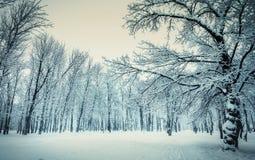 Όμορφο υπόβαθρο χειμερινών τοπίων με τα χιονισμένους δέντρα και τον πάγο Στοκ φωτογραφία με δικαίωμα ελεύθερης χρήσης
