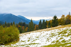 Όμορφο φθινόπωρο, ένα ζωηρόχρωμο τοπίο βουνών με τις χιονοσκεπείς αιχμές και τα κίτρινα δέντρα στοκ εικόνες